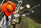 Нови попълнения моторни триони на  STIHL за работа в короната на дърветата