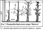 Нови формировки (резитба) на лозите