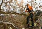Верижни триони на STIHL за работа в короната на дървото