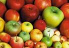 Засаждане и отглеждане на ябълкови дръвчета
