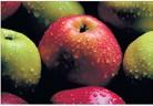 Резитба на дръвчетата и борба с вредителите по ябълкови насаждения