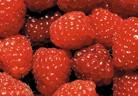 Засаждане и отглеждане на малини